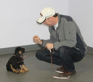 puppy learning sit with owner in kindergarten class