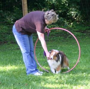 Dog Training Workshop Exercises