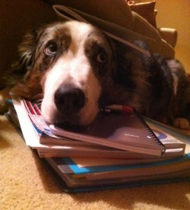 dog taking a study break :)