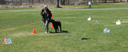 dogs in rall obedience class