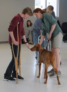 dog socializing to crutches in therapy dog prep class