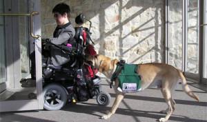 Dog Training Ballston Spa Ny